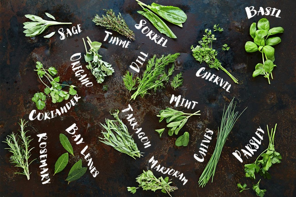 top tips storing herbs