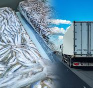 Fish in freezer and a truck on the road